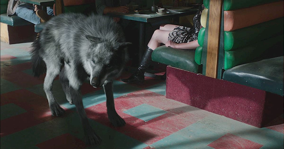 Afbeeldingsresultaat voor werewolf shadowhunters
